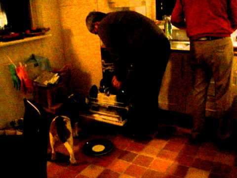Sam the dog pre rinses dishes after dinner