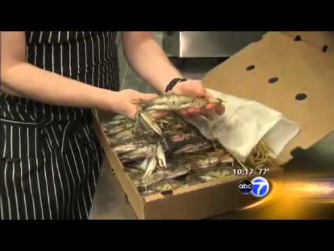 SOFTSHELL SANDWICH on ABC 7's 10 p.m. News