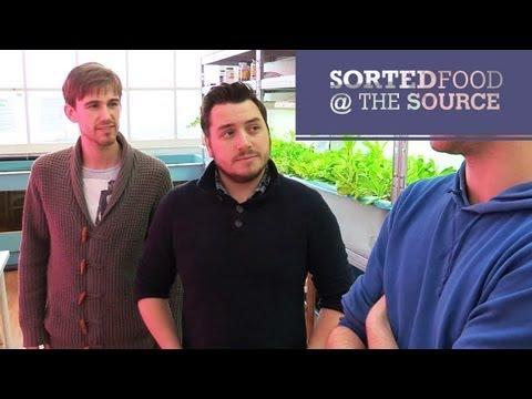 Tilapia Salad | SortedFood @ The Source